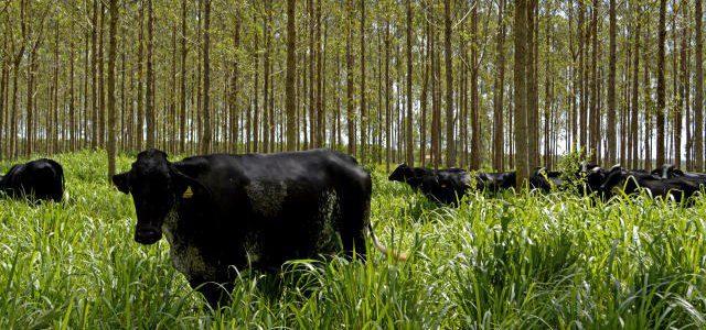 MS possui 3ª maior área agrícola financiada pelo Programa Agricultura de Baixo Carbono, no país